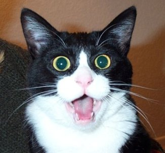 cat shocked